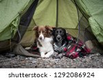 two dogs are camping in a tent. ... | Shutterstock . vector #1292086924