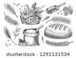set of wheat and cereals.... | Shutterstock .eps vector #1292131534