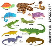 Reptile Vector Animal Reptilia...