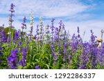 Beautiful Blooming Purple...