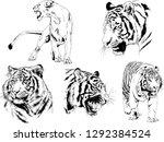 vector drawings sketches... | Shutterstock .eps vector #1292384524