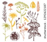 floral elements collection.... | Shutterstock .eps vector #1292622187