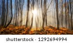 forest with young trees in... | Shutterstock . vector #1292694994