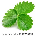 strawberry leaf isolated on... | Shutterstock . vector #1292753251
