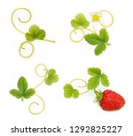 wild strawberry isolated on... | Shutterstock . vector #1292825227