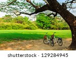 Bicycles Under Big Tree In The...