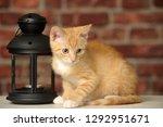 little ginger kitten on a brick ... | Shutterstock . vector #1292951671