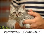 little gray kitty with sore eyes | Shutterstock . vector #1293006574