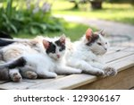 Stock photo adorable kitten resting with his mother in the garden 129306167