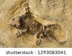 seymouria  seymouria...   Shutterstock . vector #1293083041