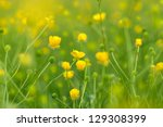Blooming Little Yellow Meadow...
