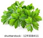 bunch of green coriander on a... | Shutterstock . vector #129308411