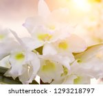 orchid flower in tropical... | Shutterstock . vector #1293218797