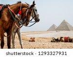 Stock photo horses in desert near pyramids in giza egypt 1293327931