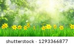 spring flowers and green grass... | Shutterstock . vector #1293366877