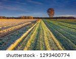 beautiful sunrise over the... | Shutterstock . vector #1293400774