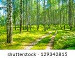 In Birch Forest