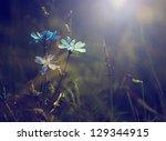 Vintage Photo Of Wild Flower I...
