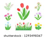 spring garden flowers vector... | Shutterstock .eps vector #1293498367