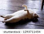 Stock photo cat lying down and resting on the floor 1293711454