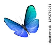 Stock photo blue butterfly isolated on white background 1293793051