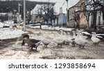 geese crossing on the street on ... | Shutterstock . vector #1293858694