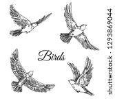 set of flying birds. sketch.... | Shutterstock .eps vector #1293869044