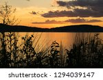 silhouettes of plants in the... | Shutterstock . vector #1294039147
