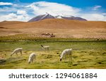 bolivian altiplano with snow...   Shutterstock . vector #1294061884