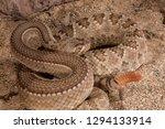 western diamondback rattlesnake ... | Shutterstock . vector #1294133914