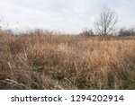 Dried Grasses In A Winter Day