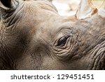 Close Up Of Rhino Head
