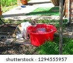 tricolor cat drinking water... | Shutterstock . vector #1294555957