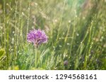 spring rain on the meadow in...   Shutterstock . vector #1294568161