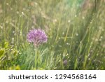 spring rain on the meadow in...   Shutterstock . vector #1294568164