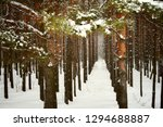 sunset in winter forest snow... | Shutterstock . vector #1294688887
