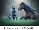 Stock photo friendship between different animals a cat a horse and a dog 1294769851