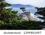 the lone cypress.  this iconic...