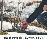 gardener cutting back shoots... | Shutterstock . vector #1294975564