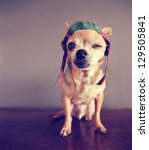 "A Chihuahua Winking ""i Love..."