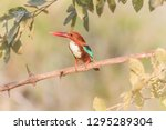 kingfisher colorful. blue green ...   Shutterstock . vector #1295289304