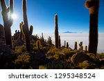 cactus on incahuasi island ... | Shutterstock . vector #1295348524