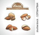 almond collection of fresh... | Shutterstock .eps vector #1295647864