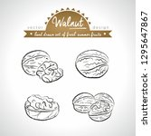 walnut. hand drawn collection... | Shutterstock .eps vector #1295647867
