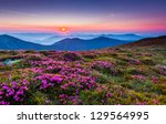 magic pink rhododendron flowers ... | Shutterstock . vector #129564995