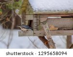 songbird eating from a wooden... | Shutterstock . vector #1295658094