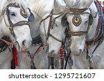 closeup of three beautiful... | Shutterstock . vector #1295721607