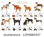 hunting dogs collection... | Shutterstock .eps vector #1295885437