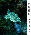 macro of hard tropical coral in ...   Shutterstock . vector #1295989021
