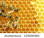 Stock photo close up view of the working bees on honey cells 129600581